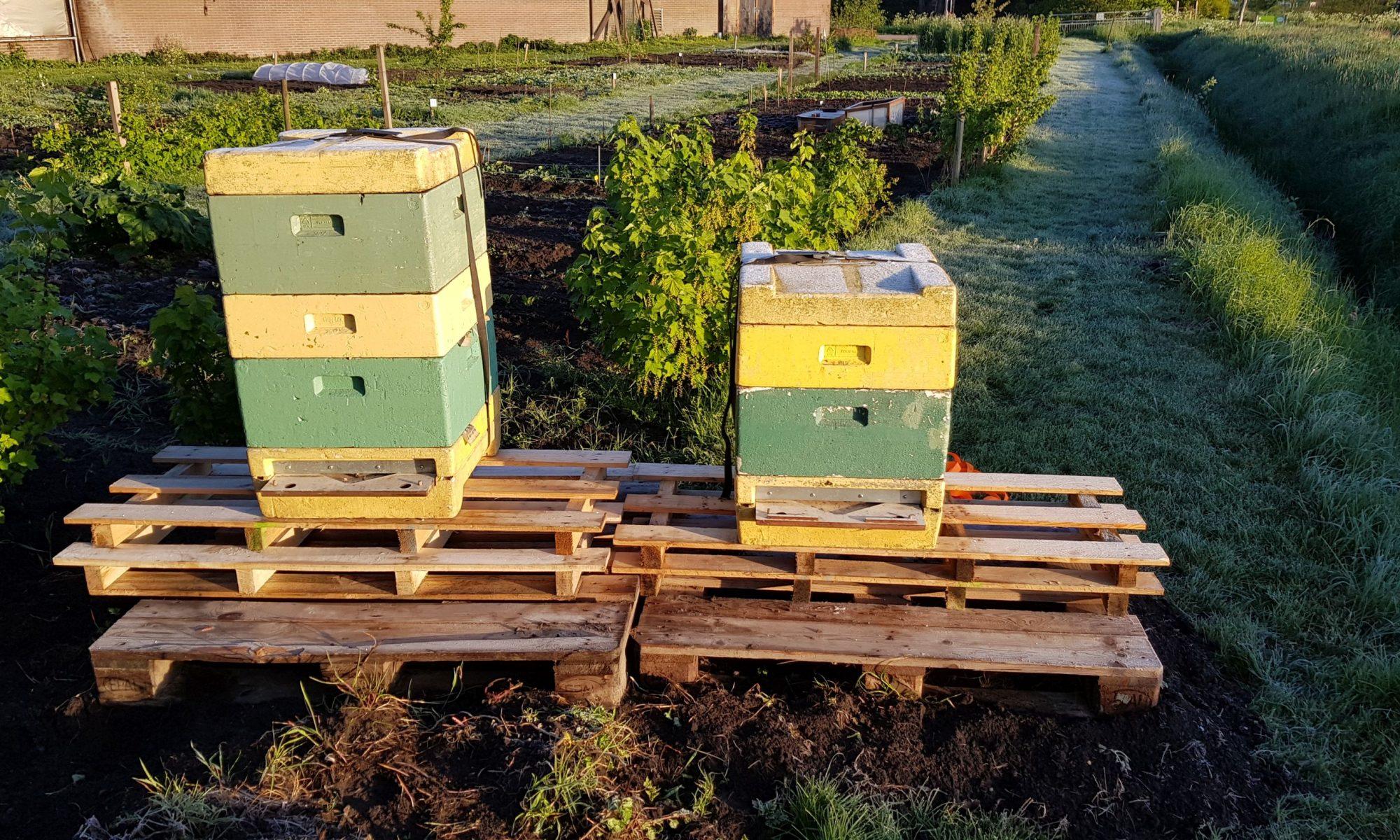 Bijenvolken op de Onlanderij moestuin
